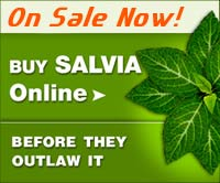 Buy Fresh Salvia